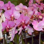 蘭の花を育てて、人としての安定と成長を感じる